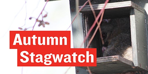Stagwatch - World Wildlife Day