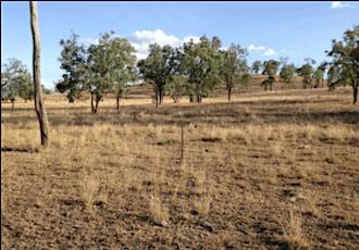 Grazing & Drought Recovery Workshop - Jimboomba tickets