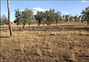 Grazing & Drought Recovery Workshop - Jimboomba