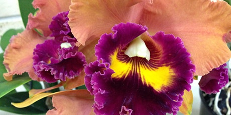 STUNNING SOUTHERN ORCHID SPECTACULAR! tickets
