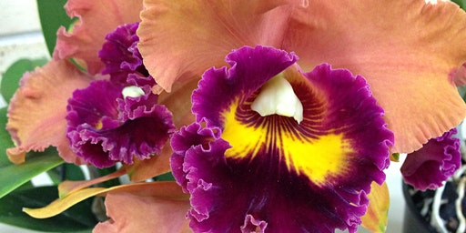 STUNNING SOUTHERN ORCHID SPECTACULAR!