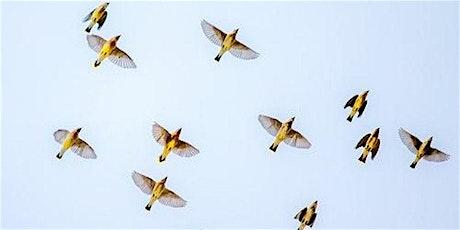 Co-Searching Gent: Het sollicitatiegesprek in vogelvlucht tickets