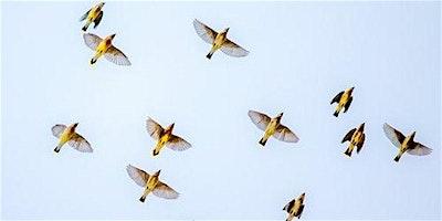 Co-Searching Gent: Het sollicitatiegesprek in vogelvlucht
