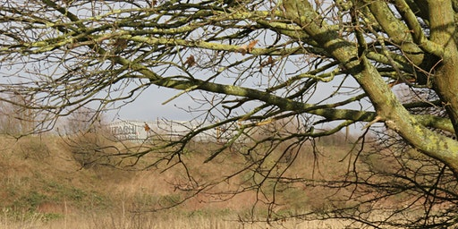 Wormwood Scrubs Biodiversity & Connectivity Masterplan – Have Your Say
