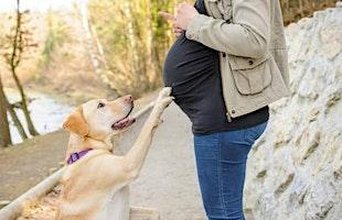 Zwanger? Maak je hond babyproof!