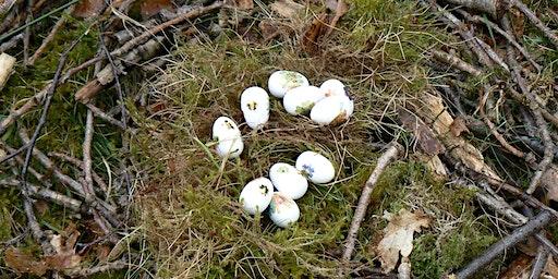 Easter Eggsplorer at Brereton Heath Local Nature Reserve