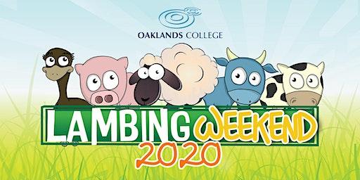 Lambing Weekend 2020