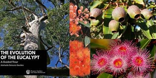 The Evolution of the Eucalypt - A Guided Tour