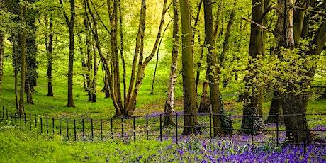 Step Up 2 Parkinson's- Hampstead Heath Walk tickets