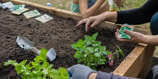 How to Start a Garden