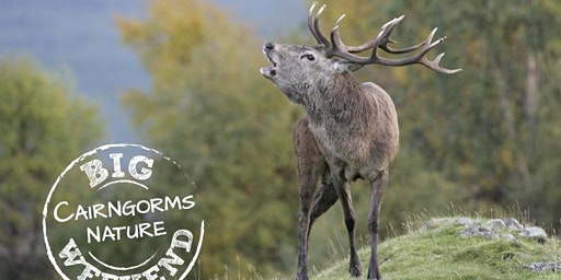 Balmoral Red Deer Management on the Queen's Estate