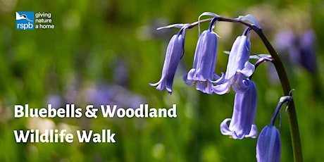 Bluebells & Woodland Wildlife Walk tickets