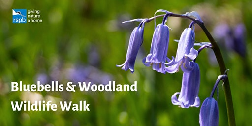 Bluebells & Woodland Wildlife Walk