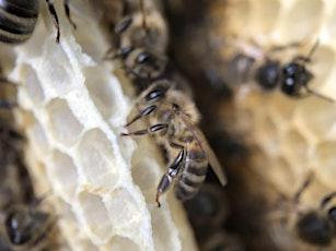 Waar bijen wonen… tickets