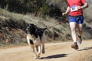 Samen sporten met je hond: Lopen