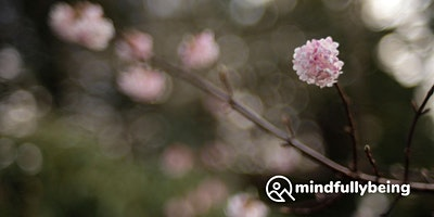 Mindfulness Non-Residential Weekend Retreat in Edinburgh
