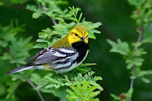 Birding Basics Class 2020