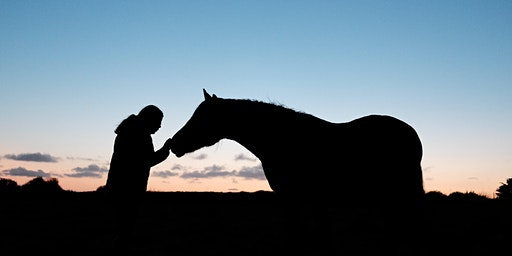 Attitude Matters! Positively influence your horse's mood and performance