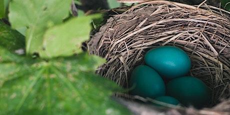 April Throws An Egg tickets