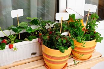 Container Gardening Workshop - Grow Food on Your Balcony tickets
