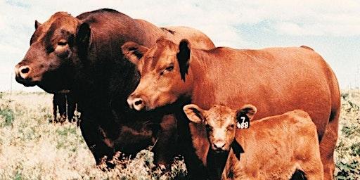 Utah Beef Field Day 2020