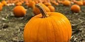 Sams Pumpkin Patch and Family Fun Farm