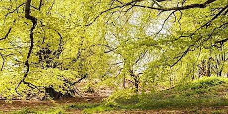 Spring Equinox Soul Nurture Retreat tickets