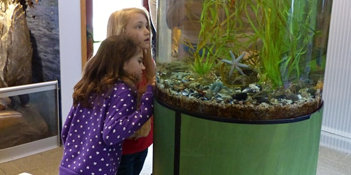 Aquarium Tour and Fish Feeding
