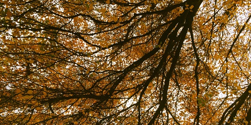 Seasonal Yin & Pin Event (Yin Yoga and Acupuncture): Autumn Edition