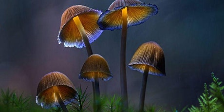 Fantastic Fungi Screening Hobart Area tickets