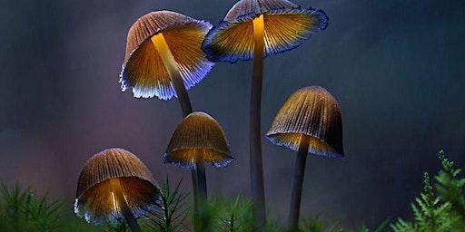 Fantastic Fungi Screening Hobart Area
