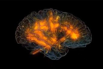 Palestra per la mente: laboratorio per mantenere in forma il cervello biglietti