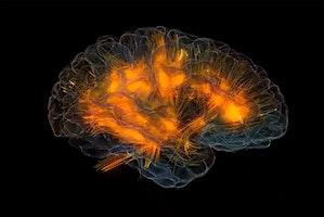 Palestra per la mente: laboratorio per mantenere in forma il cervello