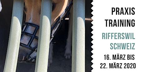 Praxiskurs - Fit für Rennbahn & Coursing, Rifferswil - CH Tickets