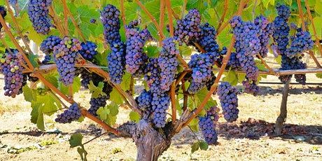 Burgundy & Beyond: Pinot Noir Around the World - Wine Tasting tickets