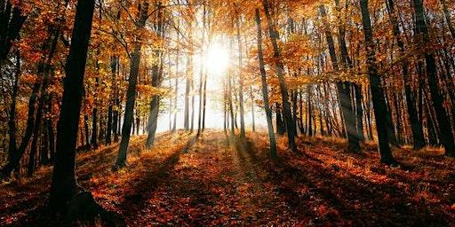 Fall Equinox Meditation + Sound Bath with Tara Atwood: Open Doors Yoga, Duxbury, Ma