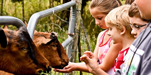 21 Acres Summer Camp: Farm Life Safari (Ages 6-9)