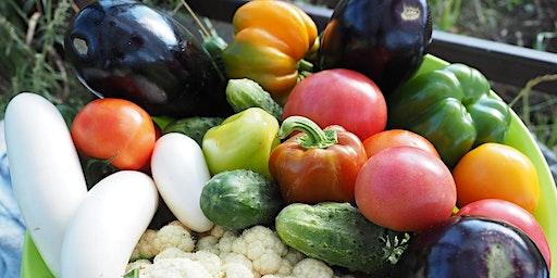 Spring/Summer Vegetable Garden