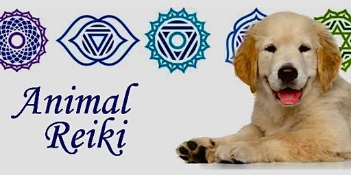 Animal Reiki Training and Certification Class