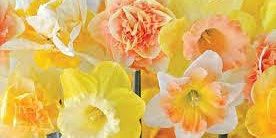 """Spring """"Have A Go"""" Craft Evening"""