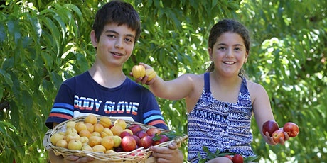 Summer Fruits Festival at S&R Orchard Perth tickets