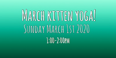 March 2020 Kitten Yoga!