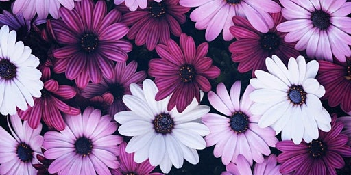 Purple Daisy Workshop March 13, 2020