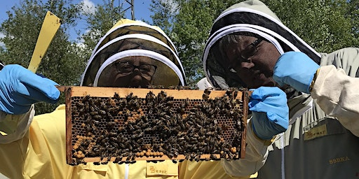 Beginners Beekeeping Course 2020 - 3 day course, Dumfries and Galloway