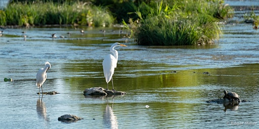 Bird Photography at The Trailhead at Clearfork, Fort Worth, Texas