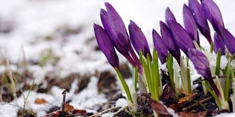Spring Equinox Ritual and Sound Healing  honors the changing of the seasons tickets