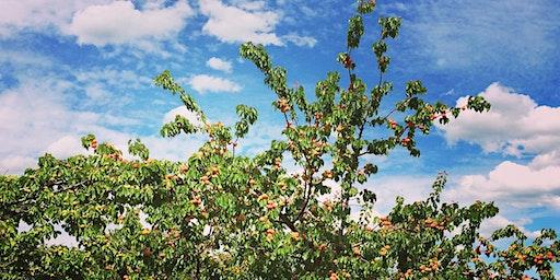 Fruit Tree Pruning Class