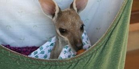 Sewing for Injured Native Animals tickets