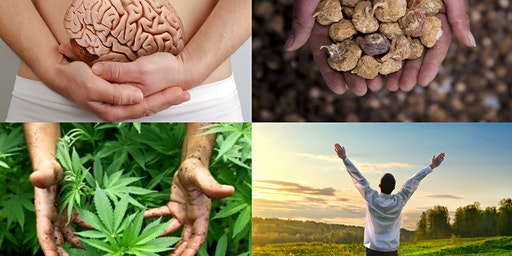 Unlocking the endocannabinoid system with maca and cannabis