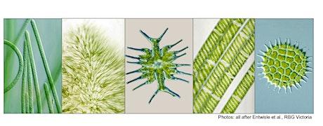 Freshwater Algae Workshop tickets
